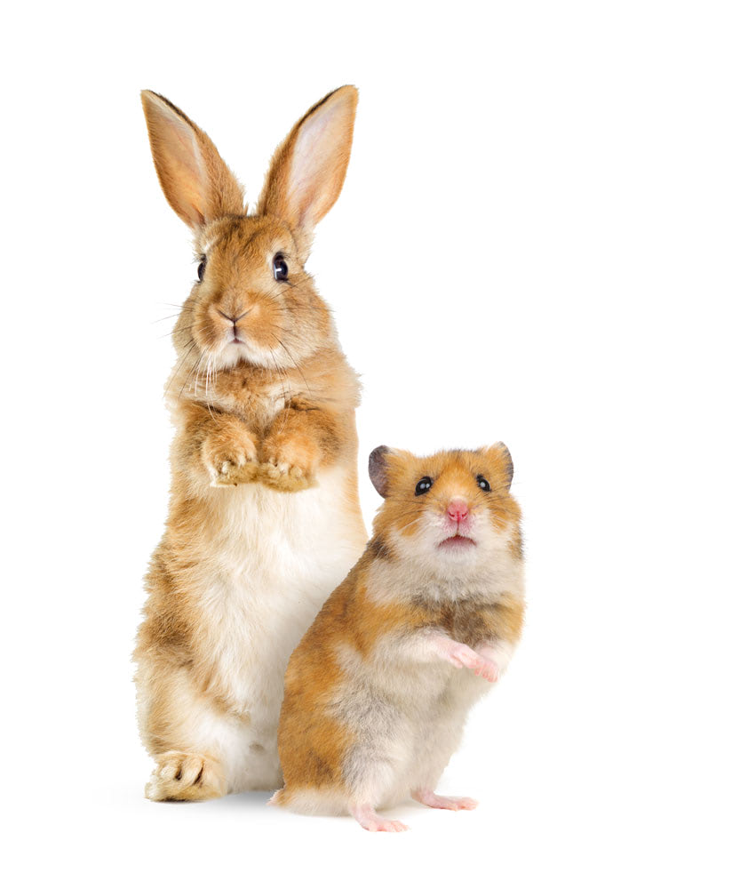 Hare and hamster