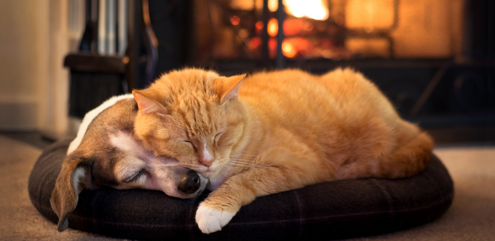 Dog and cat in front of fireplace