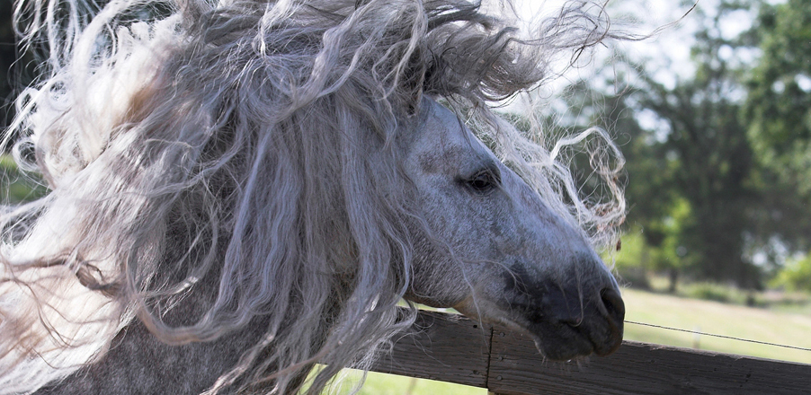 Horse with messy hair